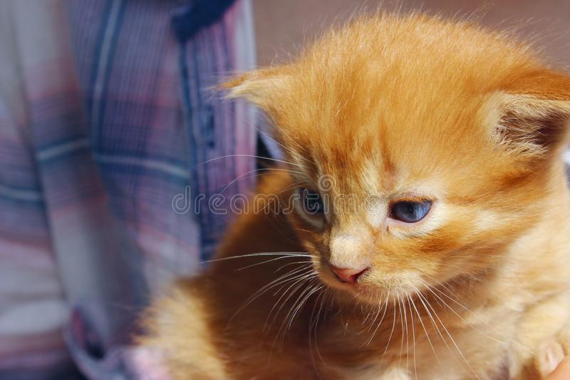 Image of cute red tabby kitten. Animals day, mammal, pets concept. royalty free stock image