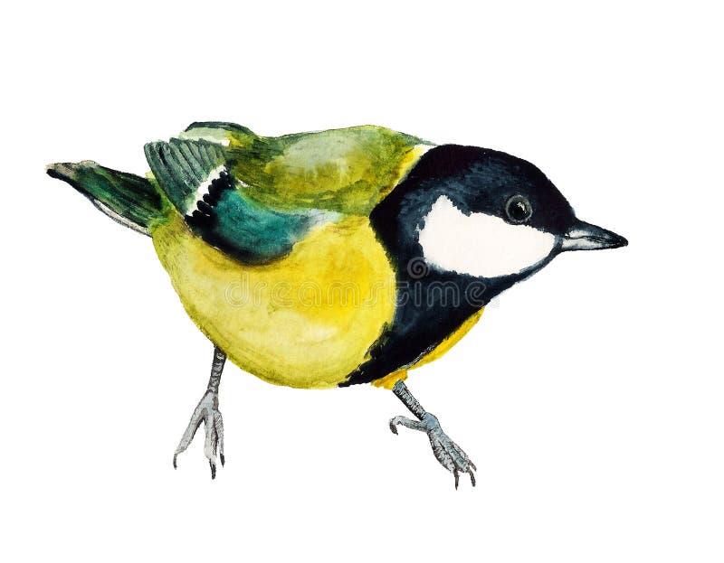 Image d'aquarelle de mésange illustration de vecteur