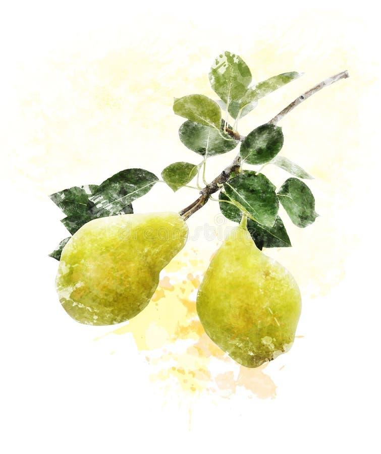 Image d'aquarelle des poires jaunes illustration stock