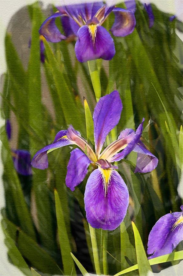 Image d'iris comme interprétation d'aquarelle illustration stock