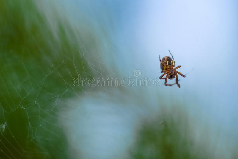image d'une araignée images stock