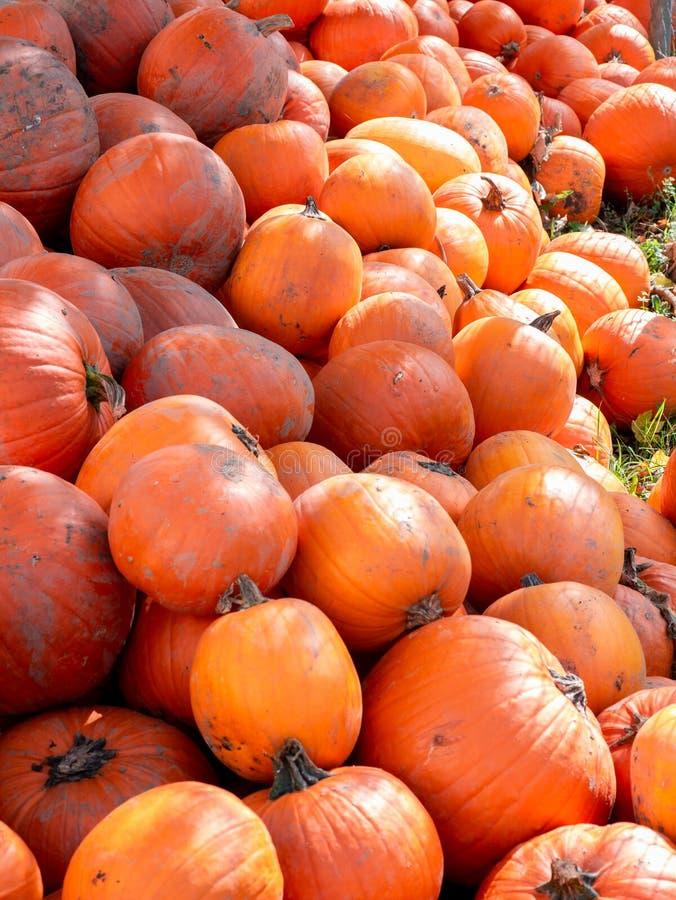 Image d'une pile des potirons oranges sales photographie stock libre de droits
