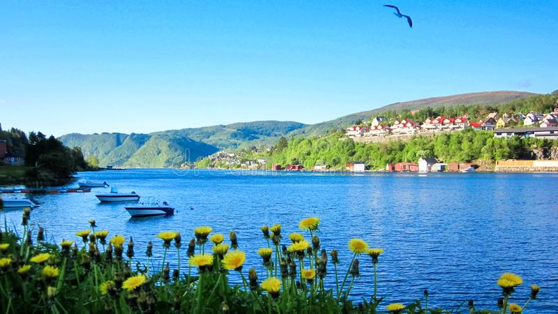 Spring Landscape with Dandelions by A Fjord, Resting Canoes and A Flying Bird in Blue Sky royalty free stock image