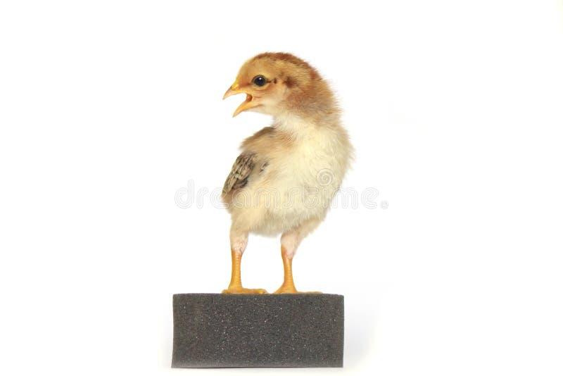 Download Image De Bouillon De Poulet De Bébé Photo stock - Image du poulet, jaune: 45368600