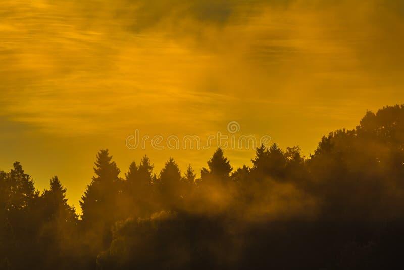 Image de brume de matin au-dessus de la forêt photo stock