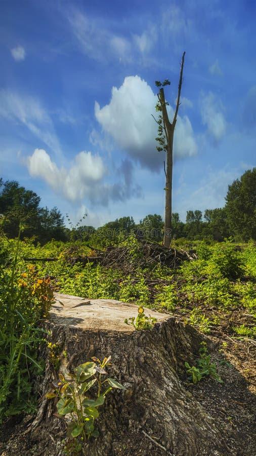 Image de concept de déboisement se composant des arbres abattus et d'un fond de ciel bleu images libres de droits
