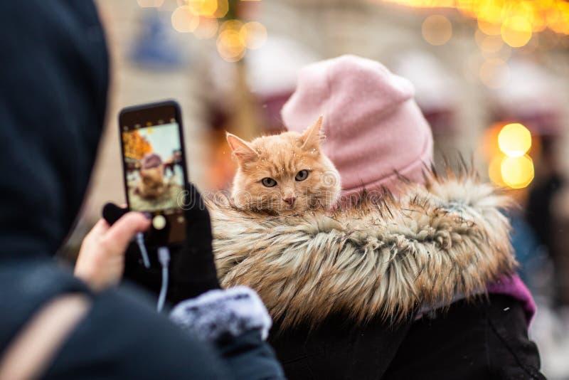 Image de dos de femme dans le chapeau rose avec le chat de gingembre sur son épaule photos stock