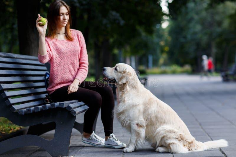 Image de femme avec la boule se reposant sur le banc, chien photos libres de droits