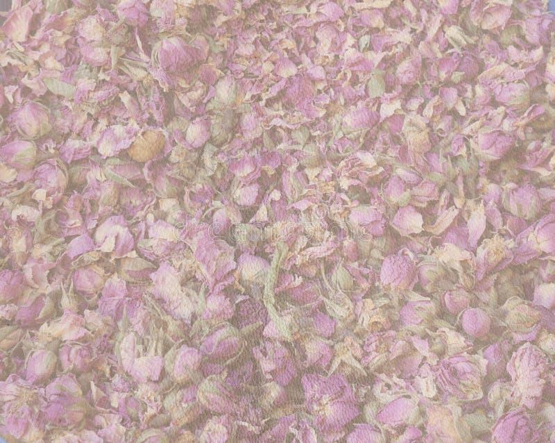 Image de fond des pétales de rose et des bourgeons dans la lumière - rose - couleurs pourpres photographie stock libre de droits