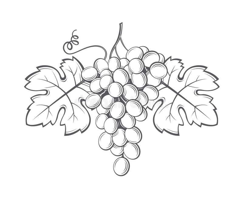 Image de groupes de raisins illustration libre de droits