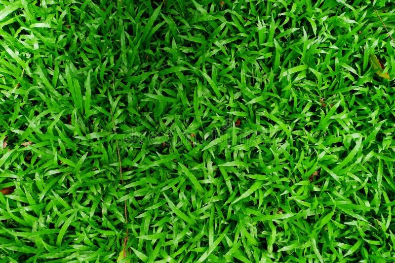 Image de haute résolution de fond d'herbe verte images libres de droits