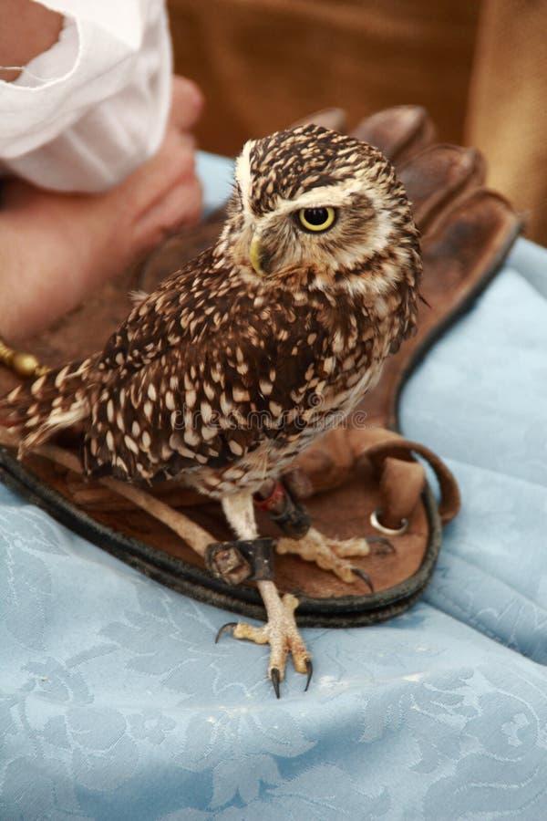 Image de l'oiseau de la proie photos stock
