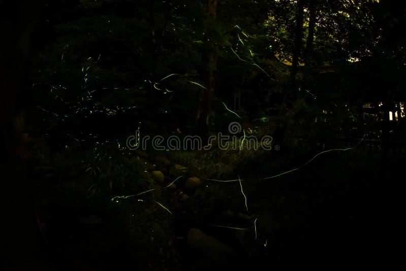 Image de luciole de luciole images stock