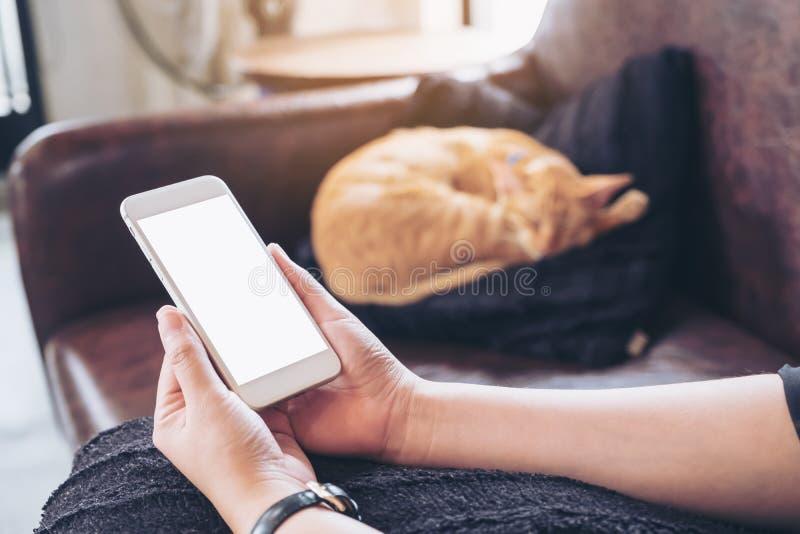 Image de maquette d'une main du ` s de femme tenant le téléphone portable blanc avec l'écran vide et un chat brun de sommeil i photographie stock libre de droits