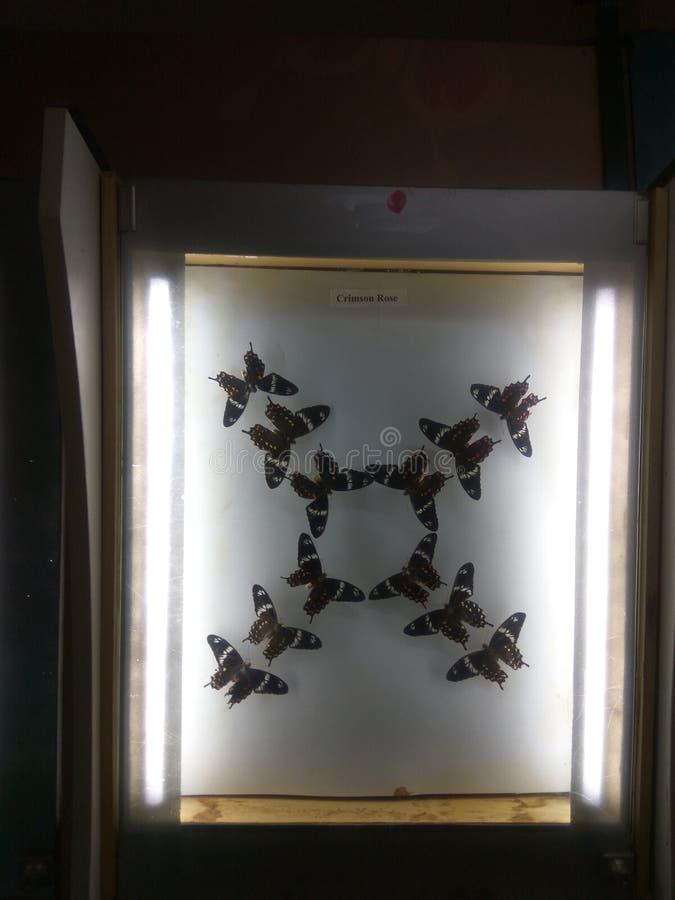Image de nature de papillons avec une marque de l'unité photographie stock libre de droits