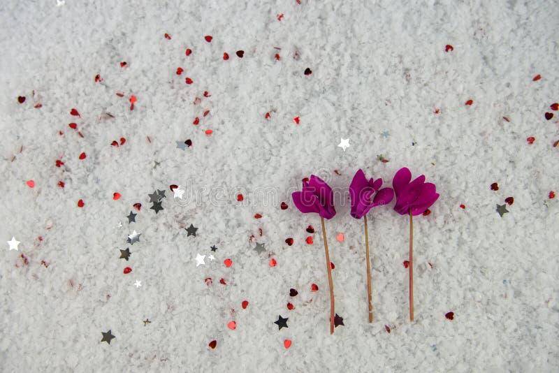 Image de photographie de fleur de saison d'hiver avec les fleurs roses de cyclamen étendues dans la neige et arrosées avec de pet photo stock