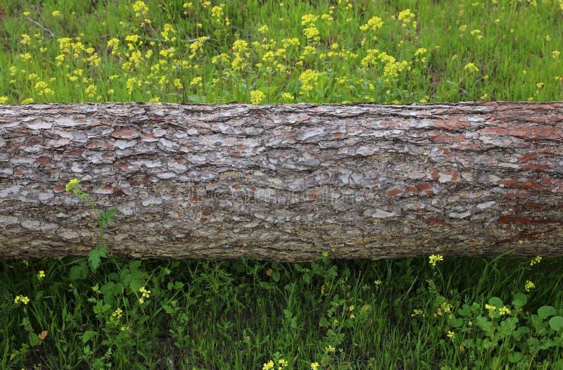 Image de tronc d'arbre dans le concept de liberté et de renouvellement de forêt photo stock