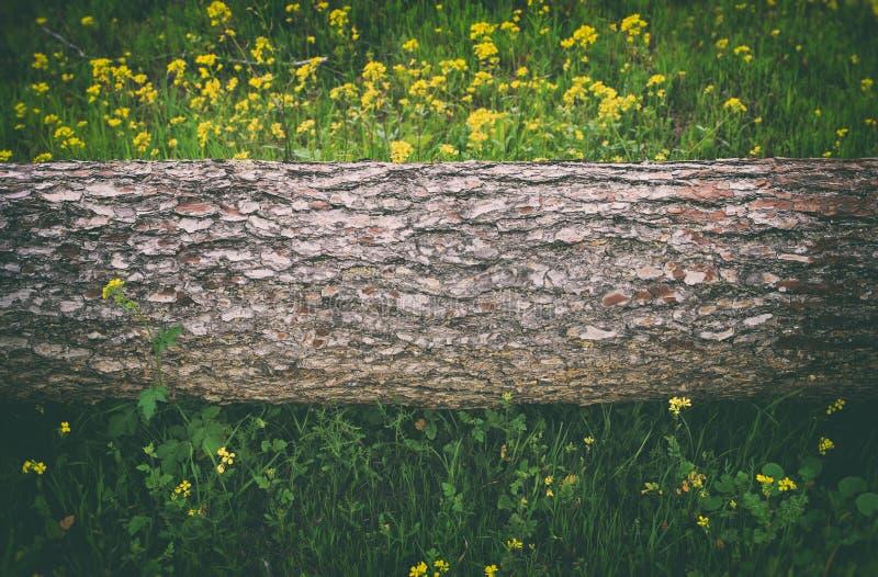 Image de tronc d'arbre dans le concept de liberté et de renouvellement de forêt images libres de droits