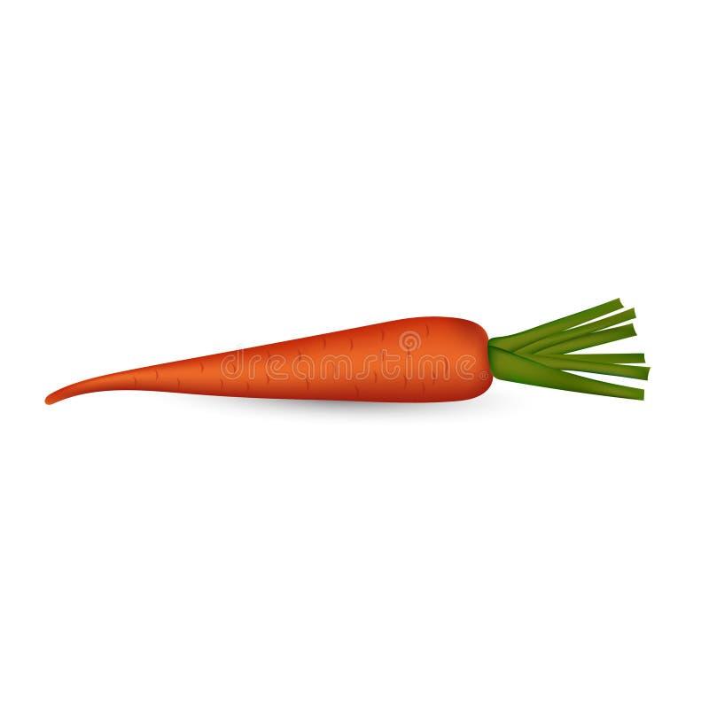 Image de vecteur de carotte ? l'arri?re-plan transparent photo libre de droits