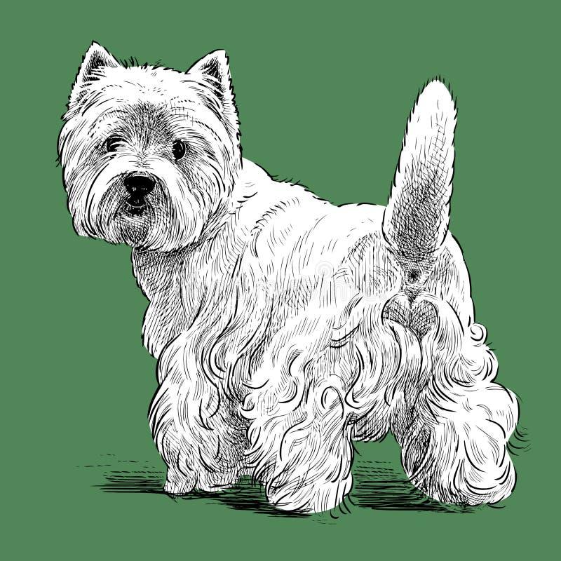 Image de vecteur de croquis d'un terrier écossais tourné illustration de vecteur