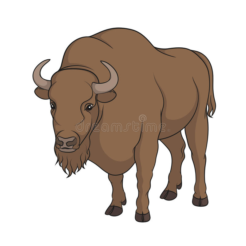 Image de vecteur de couleur de bison illustration stock