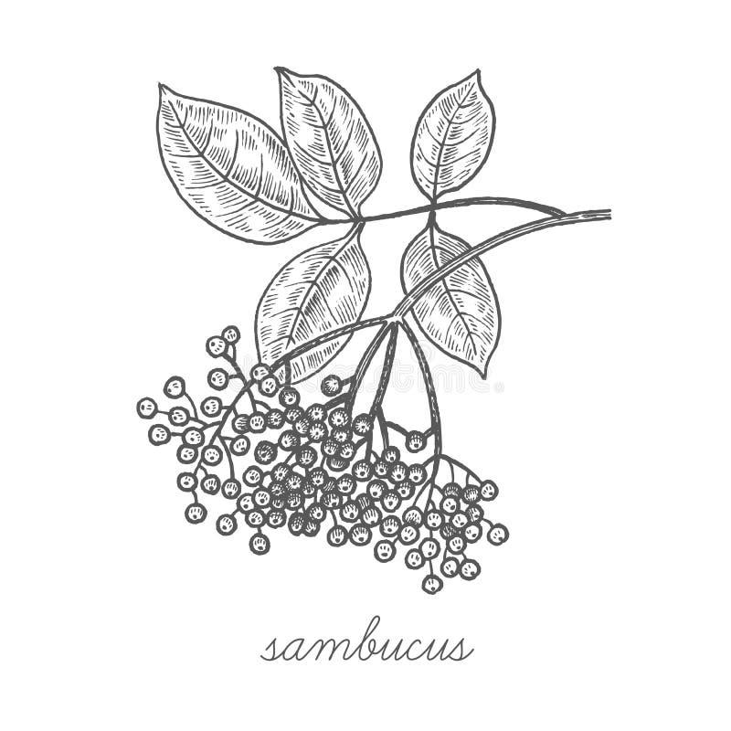 Download Image De Vecteur Des Plantes Médicinales Illustration de Vecteur - Illustration du cosmetics, illustration: 77154376