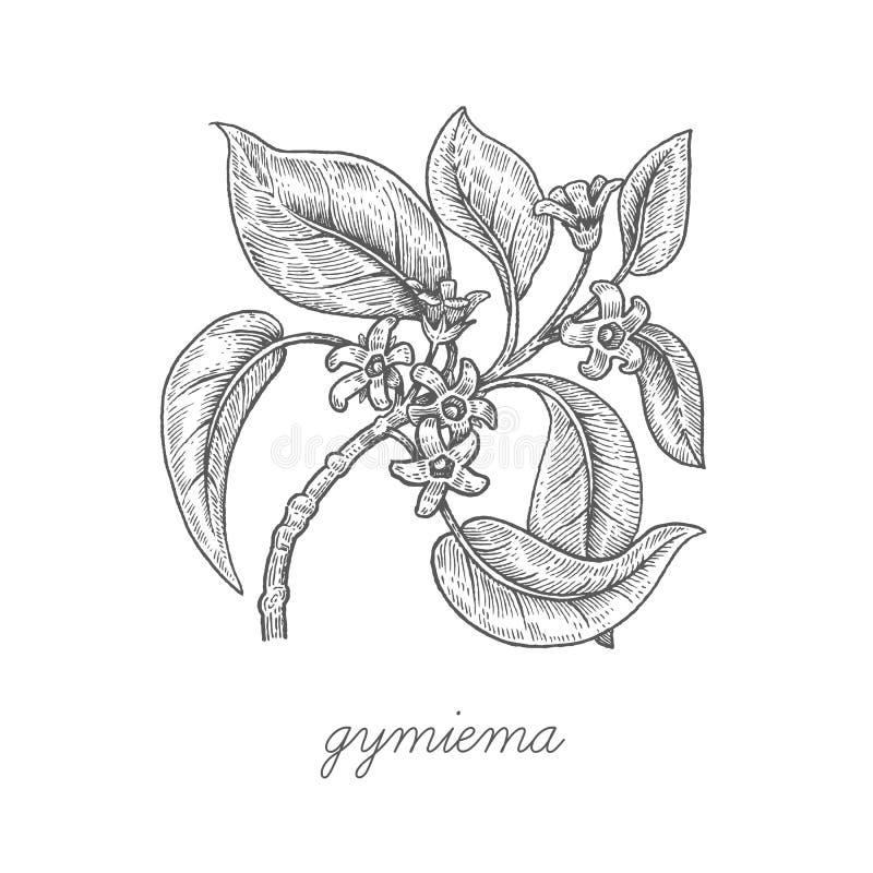 Download Image De Vecteur Des Plantes Médicinales Illustration de Vecteur - Illustration du dessins, fleur: 77154567