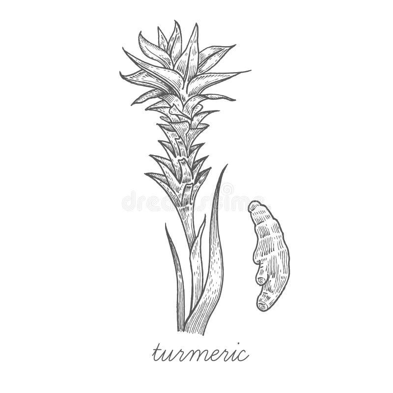 Download Image De Vecteur Des Plantes Médicinales Illustration de Vecteur - Illustration du illustration, normal: 77156426
