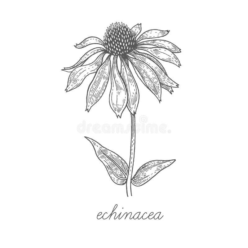 Download Image De Vecteur Des Plantes Médicinales Illustration de Vecteur - Illustration du lame, fleur: 77156615