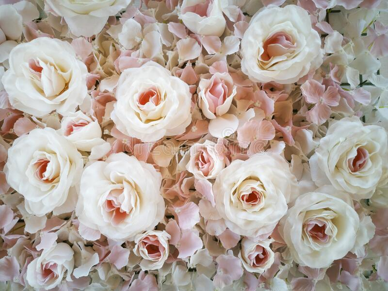 Background and floral texture of white roses and petals royalty free stock photos