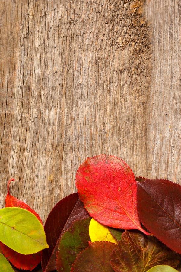 image des feuilles d'automne au-dessus de fond texturisé en bois images stock