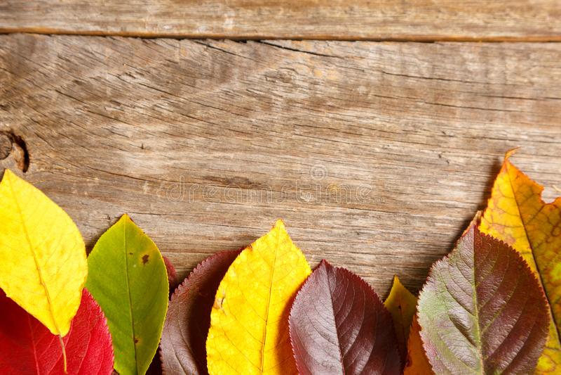 image des feuilles d'automne au-dessus de fond texturisé en bois images libres de droits