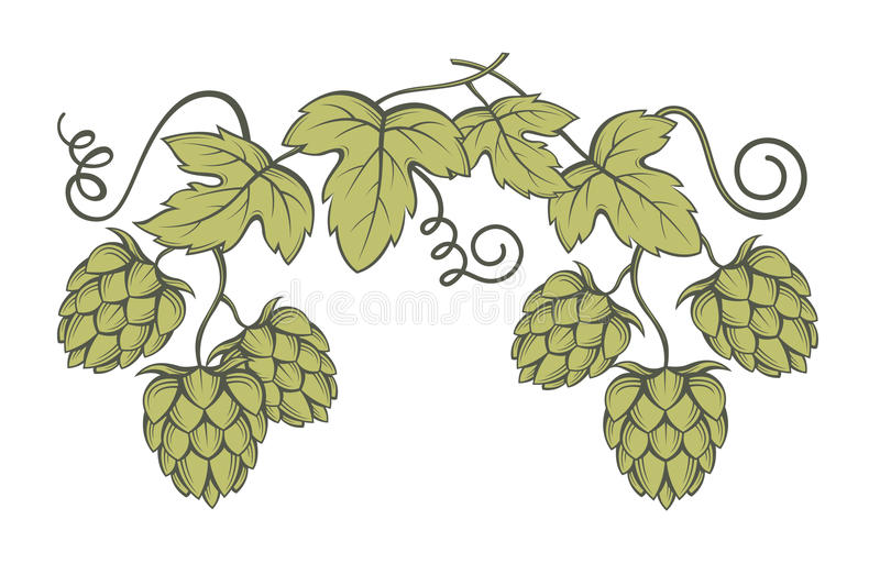Image des houblon illustration de vecteur