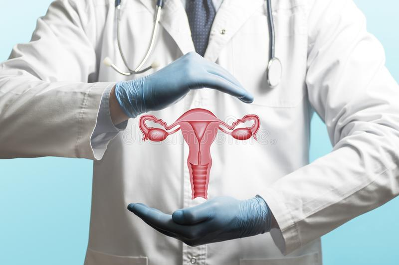 Concept of a healthy female reproductive system stock image