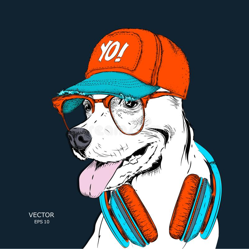 The image of the dog in the glasses, headphones and in hip-hop hat. Vector illustration. The image of the dog in the glasses, headphones and in hip-hop hat royalty free illustration