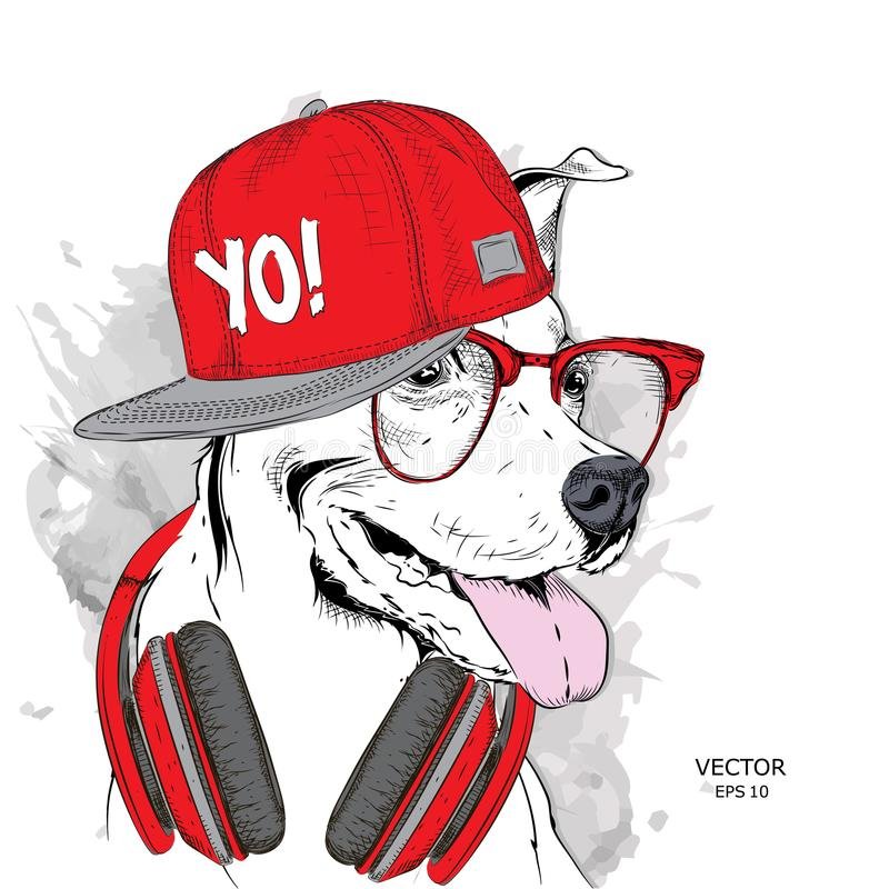 The image of the dog in the glasses, headphones and in hip-hop hat. Vector illustration. The image of the dog in the glasses, headphones and in hip-hop hat stock illustration