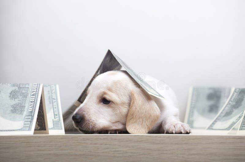 50 Black Labrador Retriever Dog Novelty Money Bill Lot