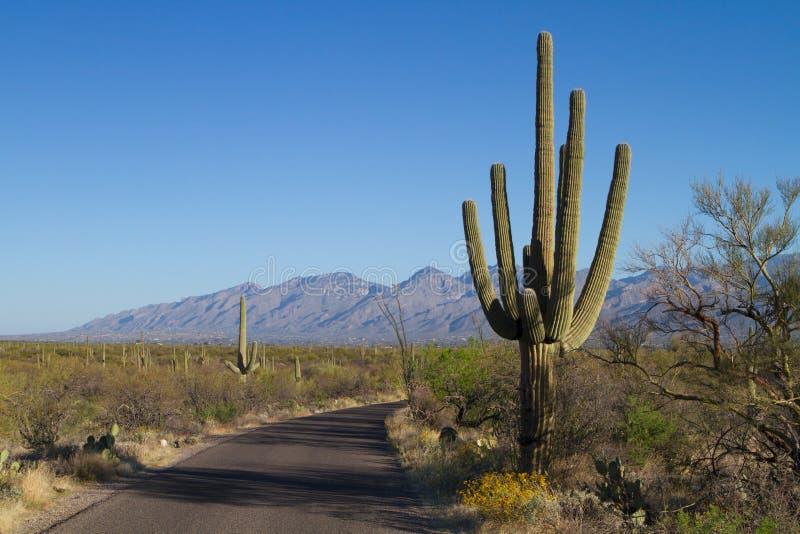 Parc national Saguaro. Image du parc national de Saguaro en Arizona près de Tucson royalty free stock image