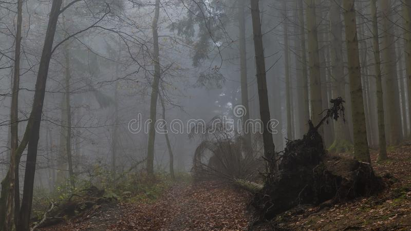 Image of a fallen tree on a path after a big storm with haze in the forest stock images