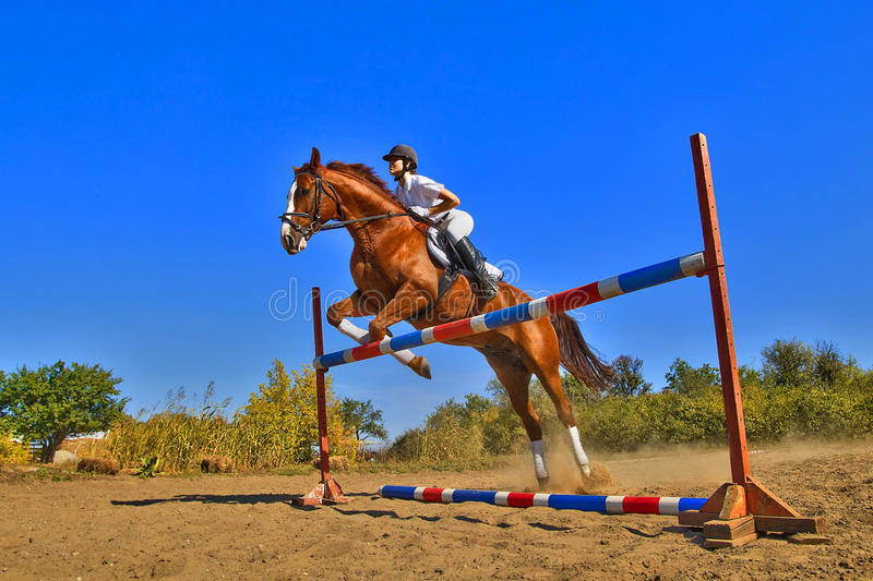 Jockey with purebred horse. Image of female jockey with purebred horse, jumping a hurdle stock photo