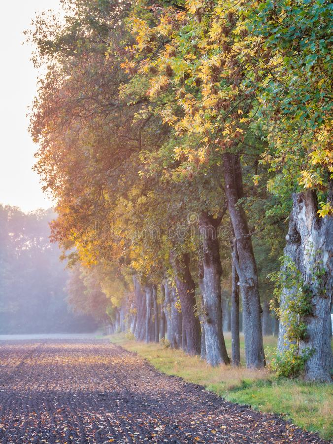 Image of field and colorful trees in autumn. During sunset stock image