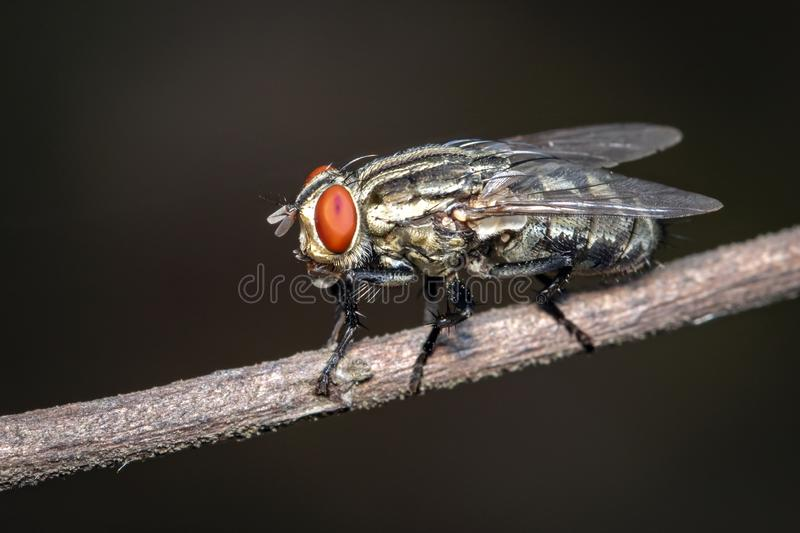 Image of a flies Diptera on brown branch on a natural background. Insect. Animal.  royalty free stock photos