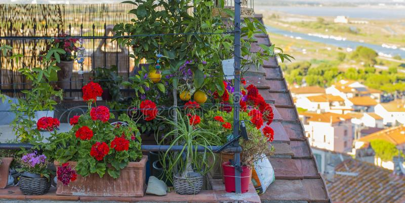 Image of flower and fruit plants stock photo