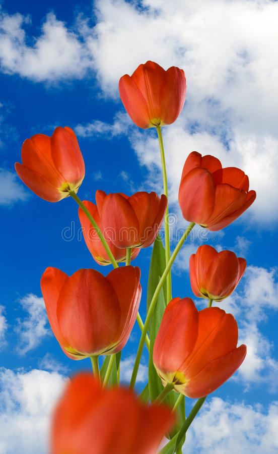 Image of flowers in the garden on a blurred background. Image of flowers against the sky. Beautiful flowers in the garden. Flowers of tulips stock image