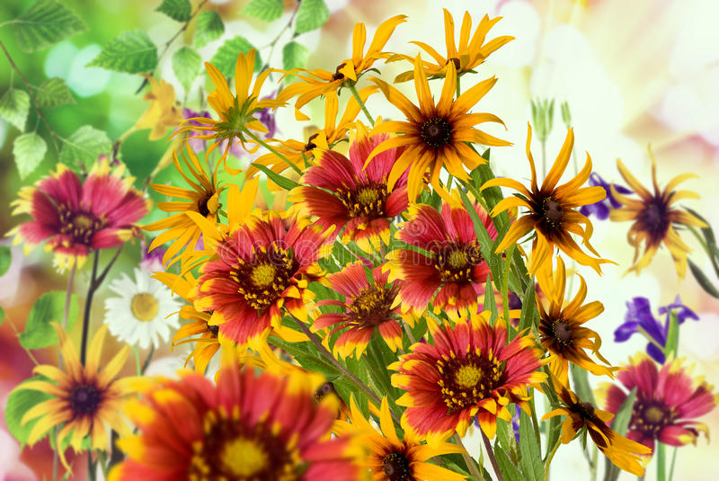 Image of flowers in the garden on a blurred background. Beautiful flowers in the garden royalty free stock photos