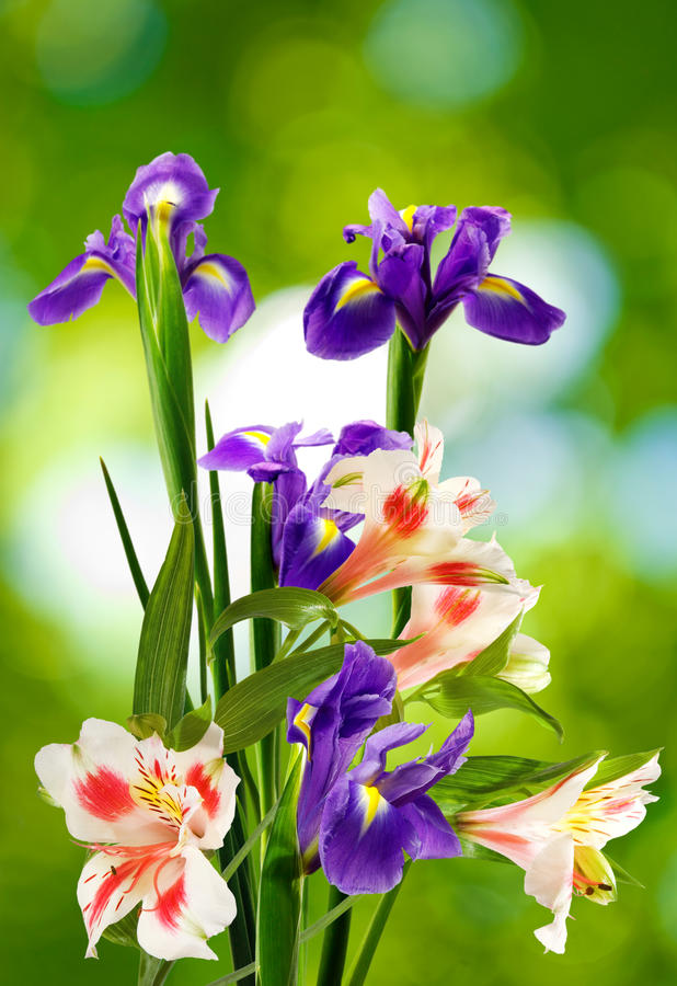 Image of flowers in the garden on a blurred background. Beautiful flowers in the garden stock photo