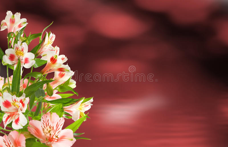 Image of flowers in the garden on a blurred background. Beautiful flowers in the garden royalty free stock photo