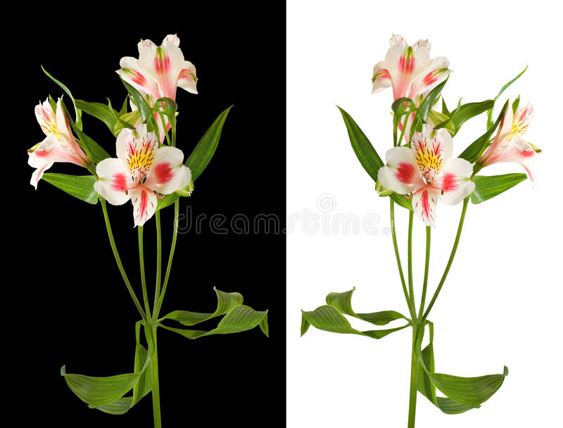 Image of flowers in the garden on a blurred background. Beautiful flowers in the garden. Isolated flowers stock photos