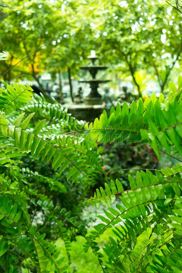 Image of fountain multi-tiered in garden shoot through green branches of tree stock photo