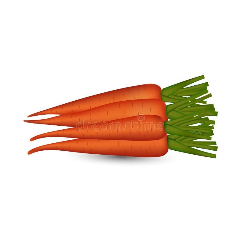 Image fraîche de vecteur de carotte à l'arrière-plan transparent photos libres de droits